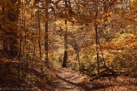 Fall Colors of Rock Creek Park
