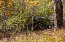 Lee Vining Meadow