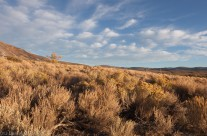 Sage Brush and Puffy Clouds