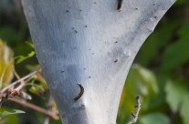 Cocoon close-up