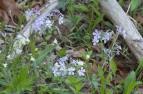 Wild flowers on Olmsted Island