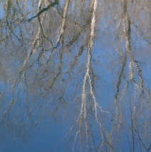 Reflection of sycamores on the Potomac