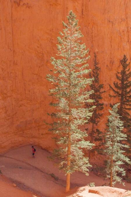 The Navajo Loop Trail – Descending
