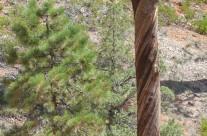 Spiral Bark Adds Strength