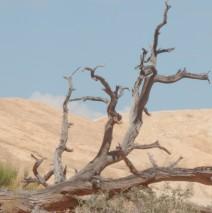The Harsh Desert